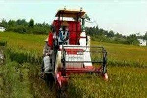 mesin potong padi combine