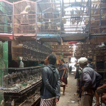 pasar burung pemalang