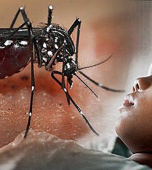 gejala-demam-berdarah