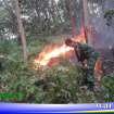 kebakaran hutan karet