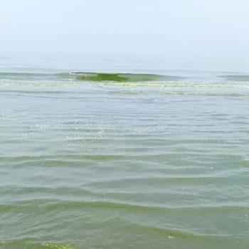 laut batang